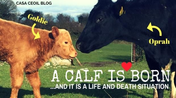 CC_Blog_A_calf_is_born_Apr17