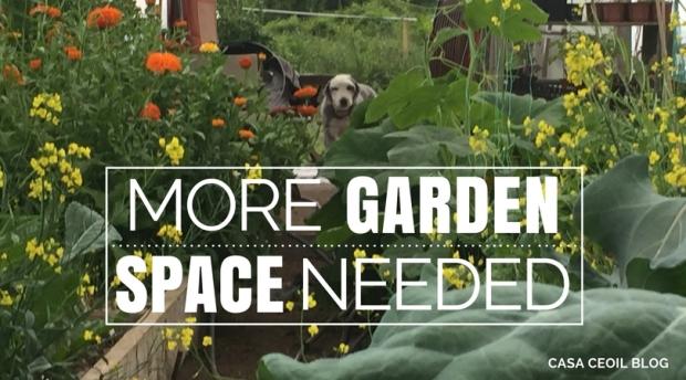 My gardening best